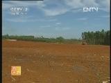农广天地,高良姜的栽培技术