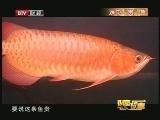 """《财富故事》 20121122 水中""""贵""""族"""