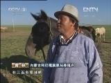 苏和巴特尔养马生财有道:致富的黑骏马