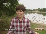 莫怡炯鳄鱼养殖:险中求财鳄鱼情