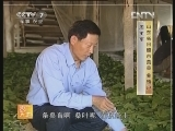 农广天地,条桑养蚕与自动上蔟技术