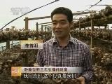陈善明食用菌致富经:卧薪尝胆三年引爆的财富