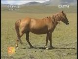 农广天地,焉耆马的养殖技术