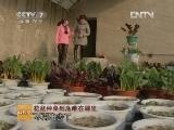 阳台种菜科技苑,花盆种菜到底难在哪里