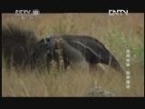 《自然传奇》 20130206 自然故事 变异星球