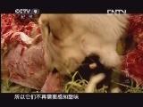 [子宫日记]为什么猫无法辨别甜味