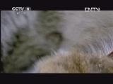 [子宫日记]犬类动物的始祖