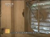 斗鸡养殖农广天地,瑶山鸡养殖技术