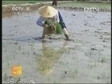 水稻强化栽培技术