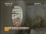 兔子养殖科技苑,小兔子吃不到奶怎么办