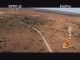 动物传奇20130405 综艺视频