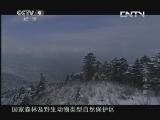 《人文地理》 20130416 神农架 第二集 生生不息