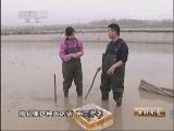 《生财有道》 20130523 养甲鱼的八零后