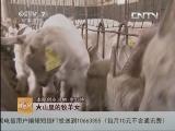 李红艳养羊致富经,巧把电影当卖点 山楂树下卖羊快