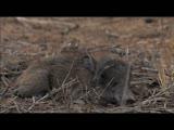 《大猫传奇》 第二集 片花