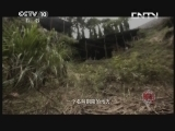 黄山 20130726 帝尊