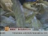 """王剑养鱼致富经,运输路上 让鱼""""冬眠""""的秘密"""