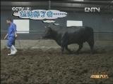 国庆特别节目:高青黑牛财富大会