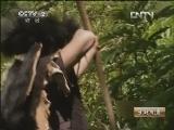 索朗群培藏香猪养殖生财有道,索朗的高原藏香猪