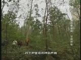 《地理中国》 20131024 秘境零距离 谷底探秘