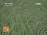 [农广天地]大花蕙兰设施栽培技术(20131209)