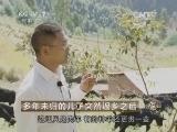 宋紫鼎黑山羊养殖致富经,多年未归的儿子突然返乡之后