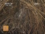 [农广天地]大球盖菇栽培技术(20140224)