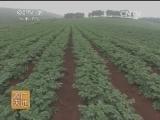 蔬菜种植技术农广天地,南方马铃薯高垄双行