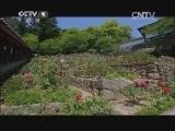 [牡丹]第二集 独立人间第一香 日本长谷寺里的唐朝牡丹