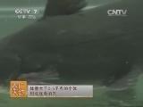 水产养殖农广天地,斑点叉尾�t网箱养殖技术(20140326)