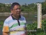 池塘鱼菜共生技术(20140416)