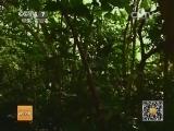 [科技苑]长在树干上的水果(20140417)