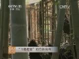 """[每日农经]""""飞檐走壁""""的竹林乌鸡(20140606)"""