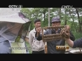 [生财有道]坎坷养蜂路 甜蜜人蜂情(20140609)