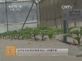[农广天地]如何提高茄子成果率(20140625)