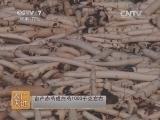 [农广天地]芍药栽培与加工(20140625)