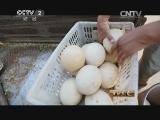 刘福辰鸵鸟养殖生财有道,刘博士的鸵鸟经