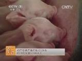 [农广天地]鲁烟白猪养殖技术(20140803) (0播放)