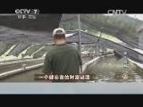 林爱福养鳗鱼致富经,一个健忘者的财富谜团(20140811)