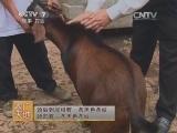[农广天地]南江黄羊养殖技术(20140819)