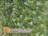 [农广天地]罗汉参栽培及加工技术(20140825)