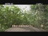 胡思荣猪养致富经,倔强老头拿着养老钱进深山(20140910)