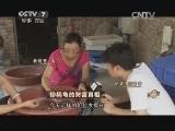 张光宋养龟致富经,珍稀龟的财富真相(20140923)