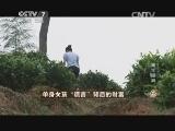 """林恩辉生态农业致富经,单身女孩""""谎言""""背后的财富(20141015)"""