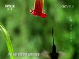 纪录片部落-纪录片从业者门户:纪录片《蜂鸟 空中舞者(精编版)》——1080P超高清百度云网盘磁力种子高清下载