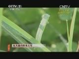 20141215 赵文鑫的除草大军