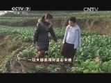 吴晓凡养鸡致富经,一双大脚赢得财富迎来她(20150126)