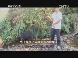 季红霞养猪致富经,为了买房子 老婆回乡养野猪(20150209)