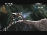 [生命]喷酸昆虫 片段