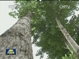 《根据地》:日寇封锁天气大旱 树叶成为军民主要口粮